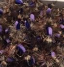 Humpy Purple Foam