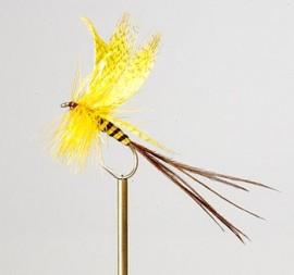 Yellow Drake Mayfly