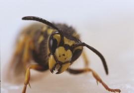 Wasp Black Yellow Realistic Foam Fly