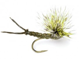 Green Drake Mayfly