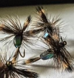Black Foam Blowfly  Humpy