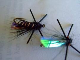 Jake's Cicada