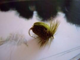 Olive Deer Hair Beetle